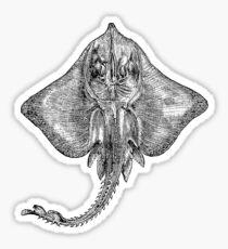 Vintage Sting Ray Fish Illustration Retro 1800s Black and White Image Sticker