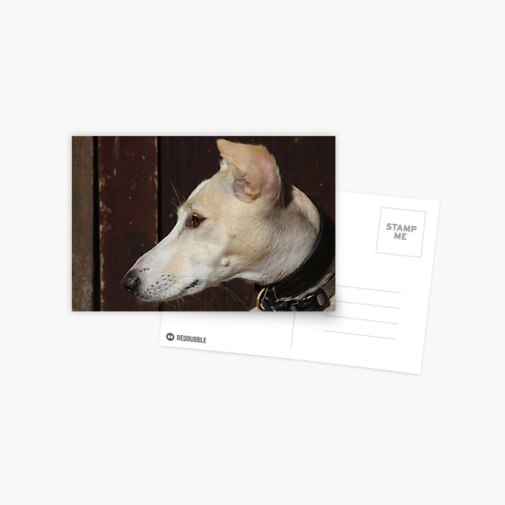 Ein Lurcher namens Bernstein Postkarte