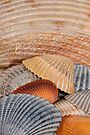 Colorful Seashells by WorldDesign