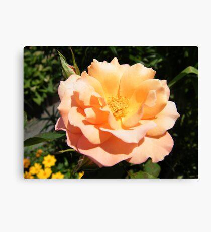 Flower Close-Up, West Street Garden, Lower Manhattan, New York City  Canvas Print