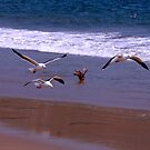 Seagulls Flying on the Beach by Buckwhite