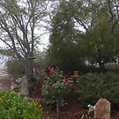 A Very Misty, Sultry Morning 'Arilka', Mount Pleasant. Adelaide Hills. S.A.  by Rita Blom
