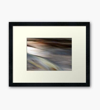 Eucalyptus #1 Framed Print