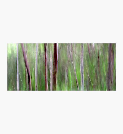 Woodlands Photographic Print
