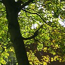 Tree Silhouette with Backlit Leaves by BlueMoonRose
