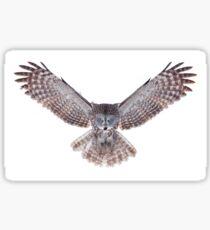 Power - Great Grey Owl Sticker