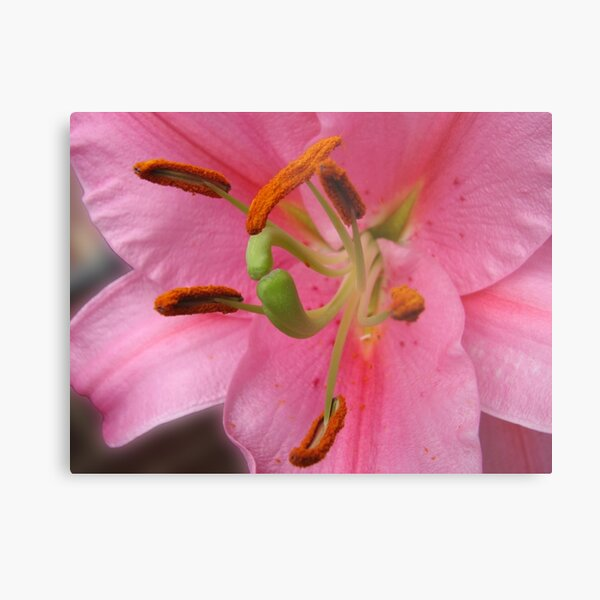 On The Defensive - Lily Supermacro Metal Print