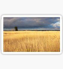 Grassy field in the Australian countryside. Sticker