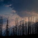 Glacier National Park after 2015 Wildfire by Alex Preiss