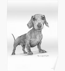 Max the Dog Poster