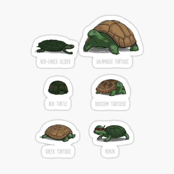 Know Your Turtles Sticker