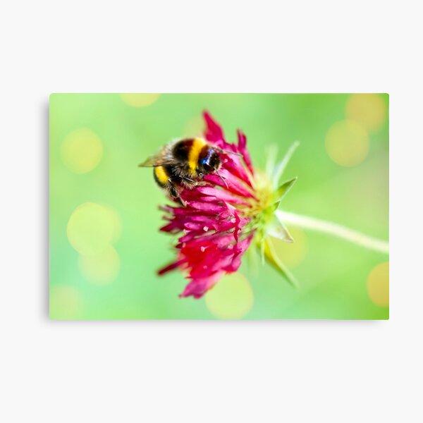 Bumblebee at work Canvas Print