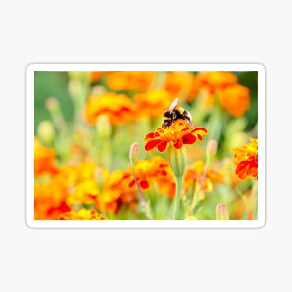 Bumblebee on Marigold Sticker