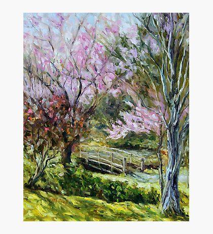 Plum Blossoms Japanese Garden  Photographic Print