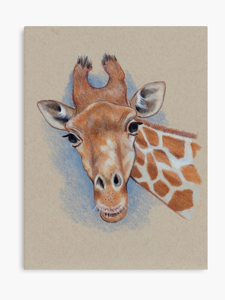 Cute Giraffe Animal Colour Pencil Drawing Canvas Print