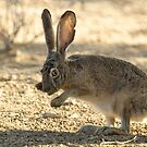 Watchful Rabbit by Sue  Cullumber