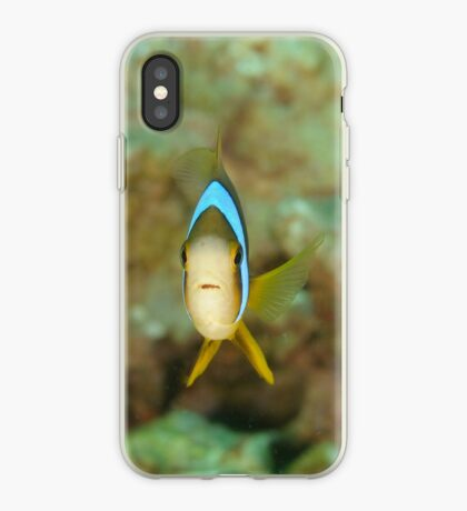 Barrier Reef Anemonefish - Amphiprion akindynos iPhone Case