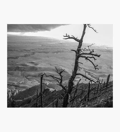 Stark Tree Photographic Print