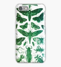 Study of Insects iPhone Case/Skin