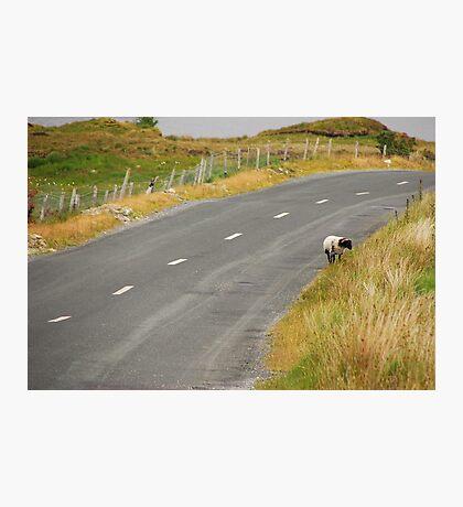Lone Sheep Photographic Print