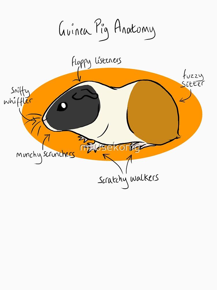 Guinea Pig Anatomy\
