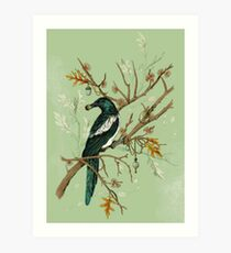 Magpie Birds Art Print