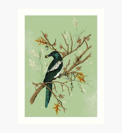 Magpie Birds Art Print