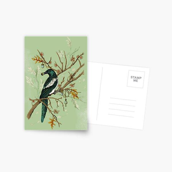 Magpie Birds Postcard
