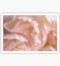 Pink and White Carnation Sticker