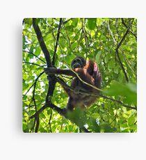 Orangutan in Borneo Rainforest Canvas Print