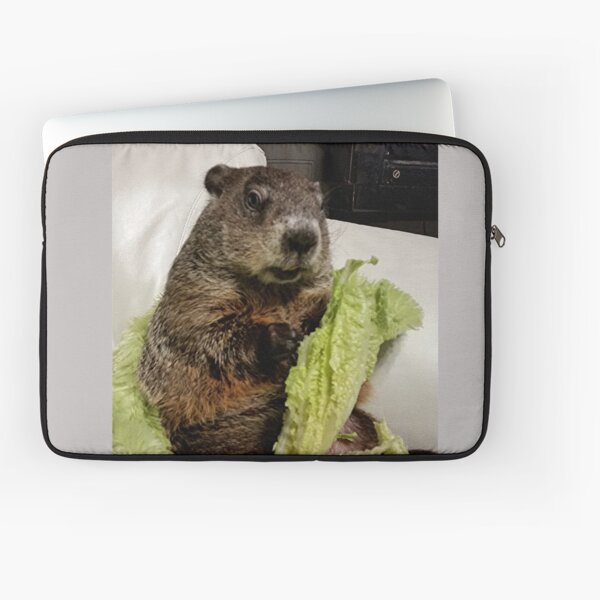 Groundhog Moses Eating Lettuce on Couch Laptop Sleeve