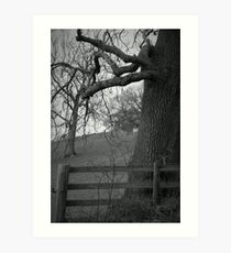 Truncated ~ Gothic Black & White Tree Image, Tremeirchion, North Wales UK Art Print