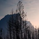 Glacier National Park after 2015 Wildfire .2 by Alex Preiss