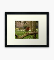 Not just for Christmas cards Framed Print