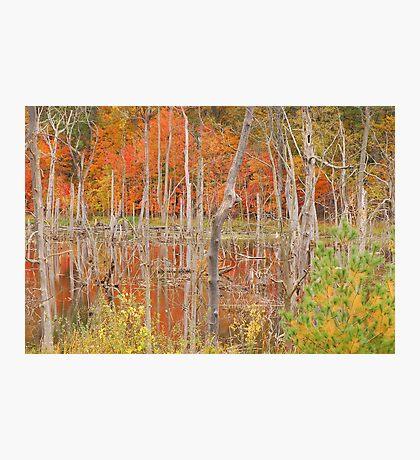 Swamp Colors Photographic Print