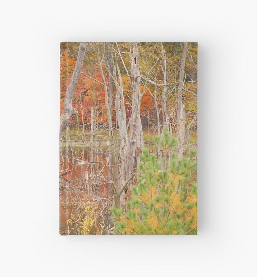 Swamp Colors by mcstory