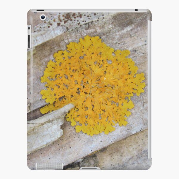 Yellow Lichen on a Log iPad Snap Case
