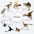 Theropoda: The Cladogram by Franz Anthony