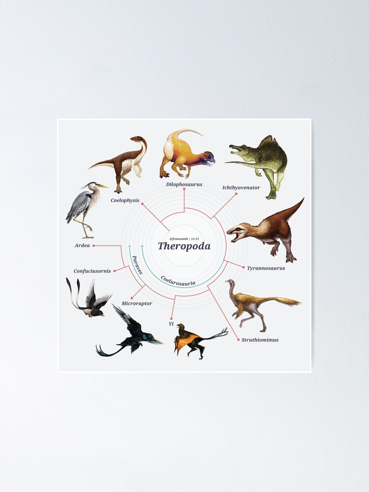 Alternate view of Theropoda: The Cladogram Poster