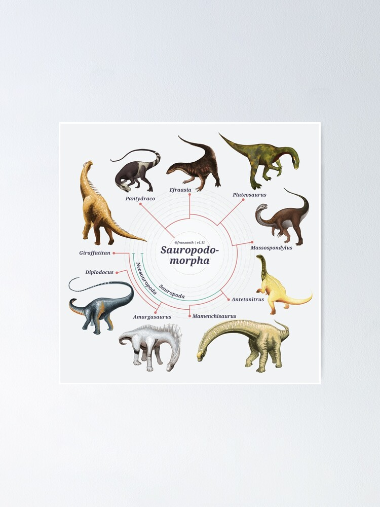 Alternate view of Sauropodomorpha: The Cladogram Poster