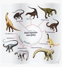 Sauropodomorpha: The Cladogram Poster
