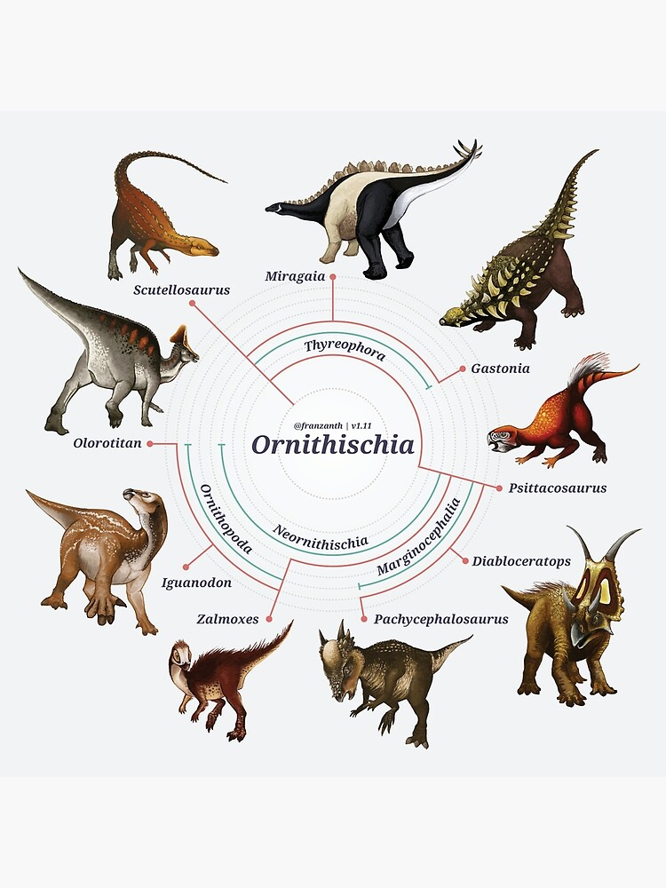 Ornithischia: The Cladogram by franzanth