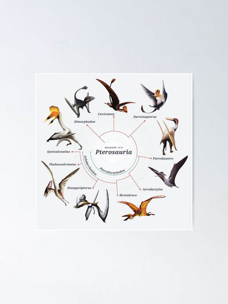 Alternate view of Pterosauria: The Cladogram Poster