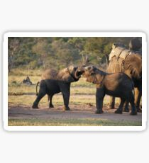 Playful Elephants Sticker