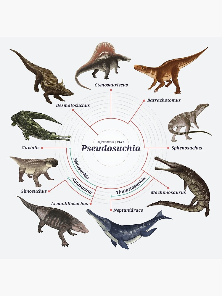 Pseudosuchia: The Cladogram by franzanth
