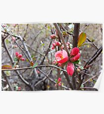 red little flowers Poster