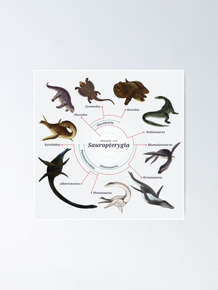 Alternate view of Sauropterygia: The Cladogram Poster