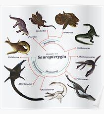 Sauropterygia: The Cladogram Poster