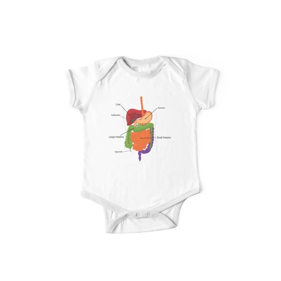 Anatomy T-Shirt - Inside Body Digestion by deanworld