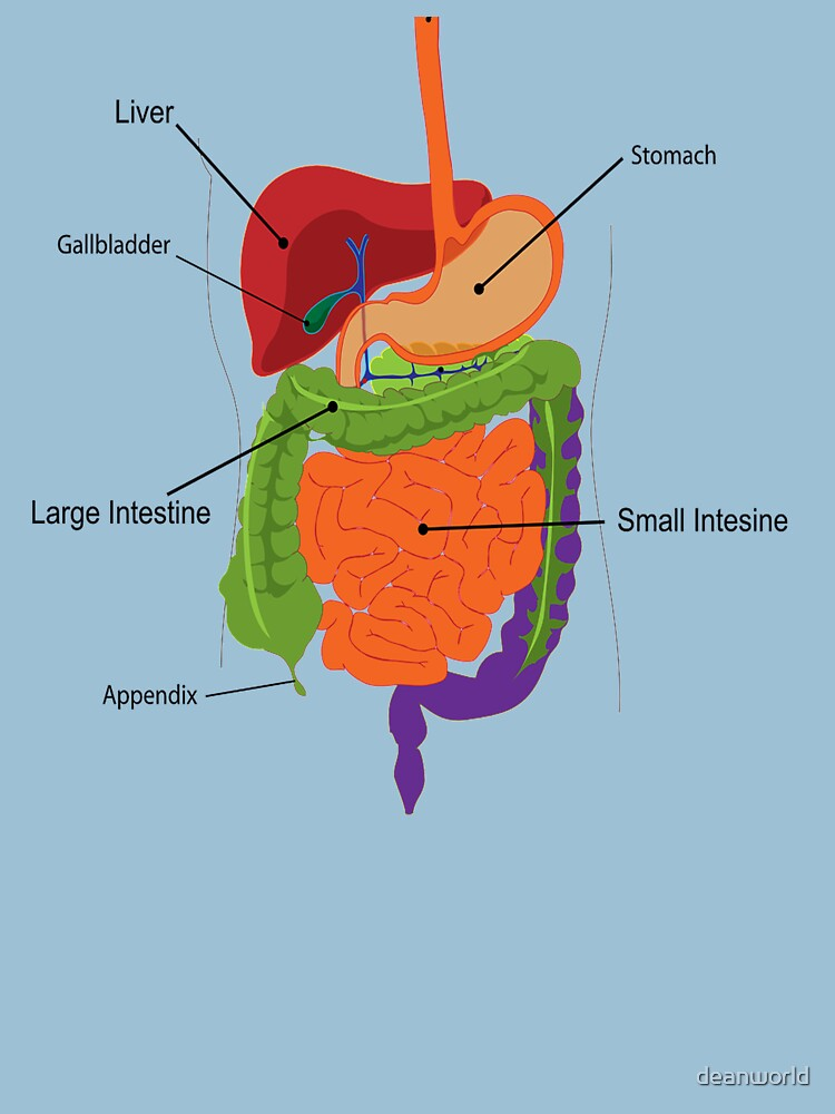 Anatomy T Shirt Inside Body Digestion Unisex T Shirt By Deanworld